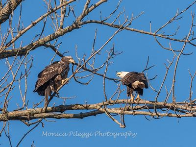Conowingo Eagles 21 Dec 2017-6532