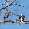 Conowingo Eagles 21 Dec 2017-6538