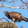 Conowingo Eagles 21 Dec 2017-6498