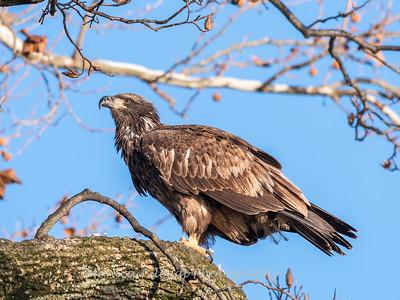 Conowingo Eagles 21 Dec 2017-6501