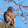 Conowingo Eagles 21 Dec 2017-6509
