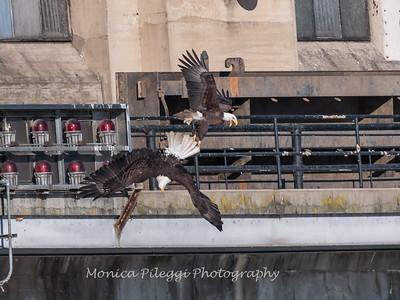 Conowingo Eagles 21 Dec 2017-6593