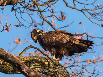 Conowingo Eagles 21 Dec 2017-6437