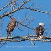 Conowingo Eagles 21 Dec 2017-6540