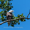 Eagles Conowingo Dam 22 June 2019-2586