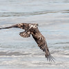 Eagles Conowingo Dam 22 June 2019-2785