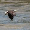 Eagles Conowingo Dam 22 June 2019-3063