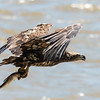 Eagles Conowingo Dam 22 June 2019-2563