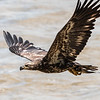 Eagles Conowingo Dam 22 June 2019-2800