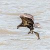 Eagles Conowingo Dam 22 June 2019-2777