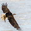 Eagles Conowingo Dam 22 June 2019-2695