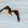 Eagles Conowingo Dam 22 June 2019-2688