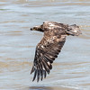 Eagles Conowingo Dam 22 June 2019-2778
