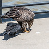 Eagles Conowingo Dam 22 June 2019-2942
