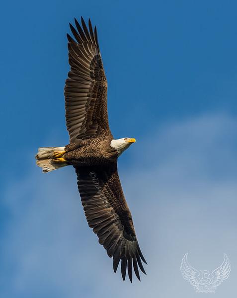 _DLS2137-Dad-soaring-above