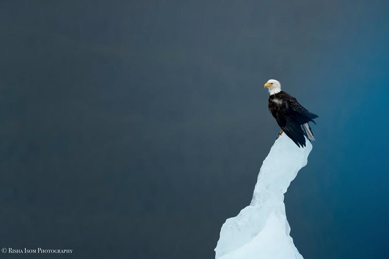 Eagle & Ice