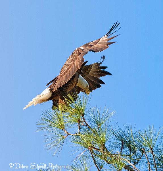 _DLS1023-Eagle-landing