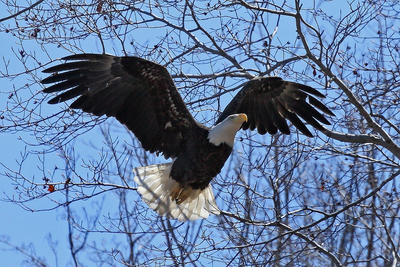 Image #8542<br /> Western N.Y.