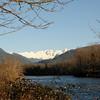 Skagit River bald eagles