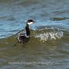 Black Water Wildlife Refuge 29 Dec 2018-4959