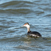Black Water Wildlife Refuge 29 Dec 2018-4916