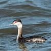 Black Water Wildlife Refuge 29 Dec 2018-4981
