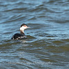 Black Water Wildlife Refuge 29 Dec 2018-4927