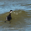 Black Water Wildlife Refuge 29 Dec 2018-4958