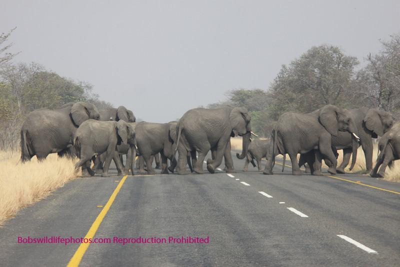 Elephants, Chobe Park, Botswana.