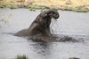 Elephant Etosha Park Namibia.