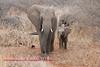 Elephant in Kruger Park South Africa