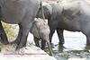 Elephant in Kruger Park South Africa. He looks safe.