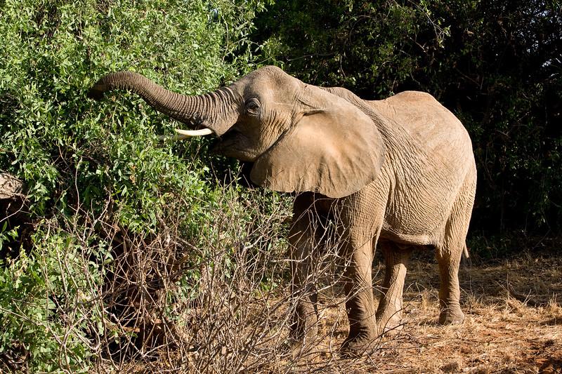 20100903_Samburu_282