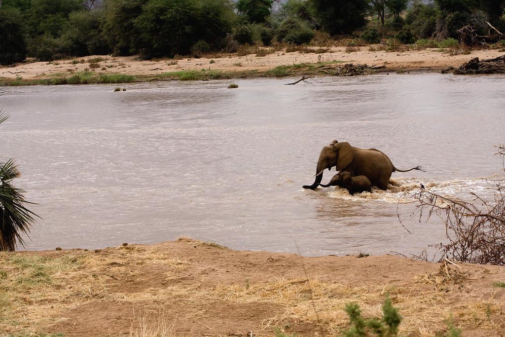 20100903_Samburu_0624