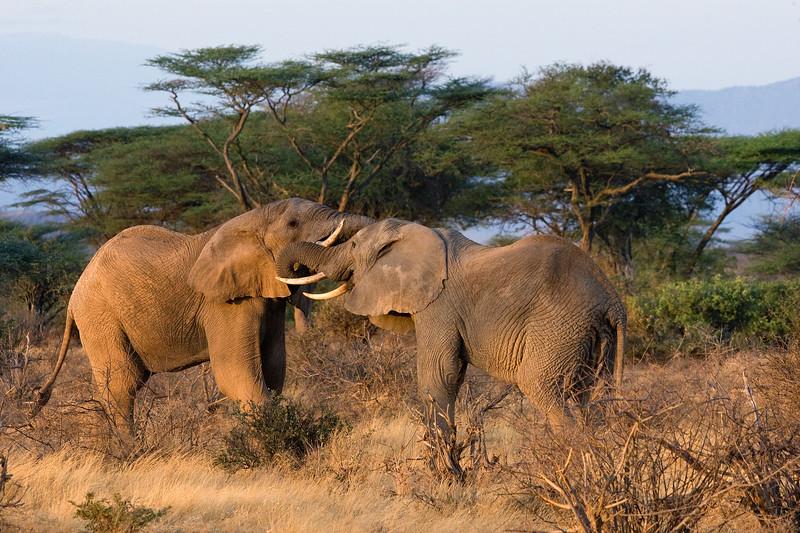 20100905_Samburu_016