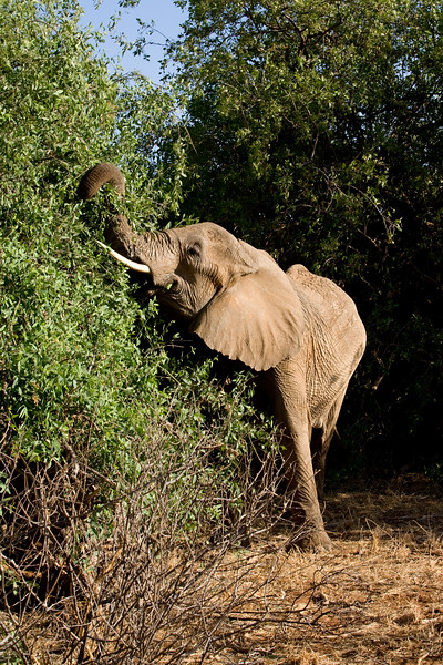 20100903_Samburu_295