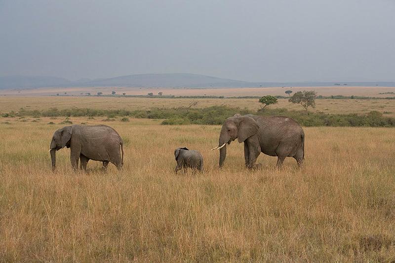 2007 07 24 Masai Mara 491