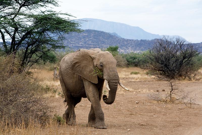 20100902_Samburu_0209