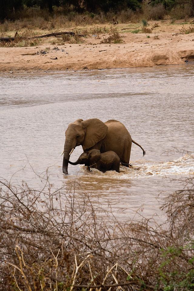 20100903_Samburu_0613