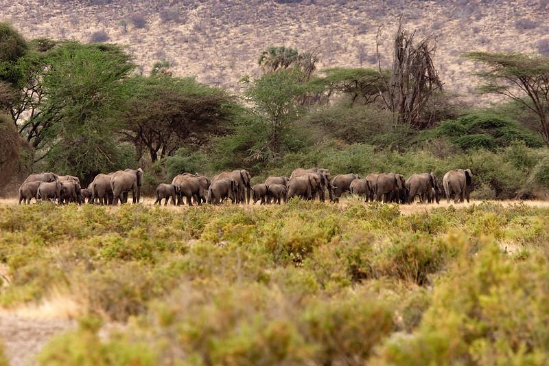 20100902_Samburu_0080