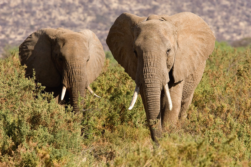 20100903_Samburu_273