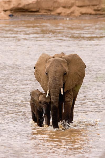 20100903_Samburu_0542