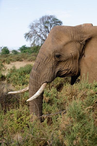 20100904_Samburu_184