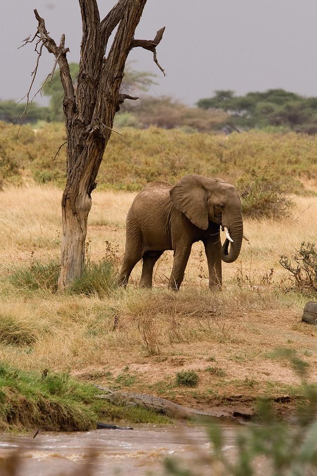 20100902_Samburu_0055