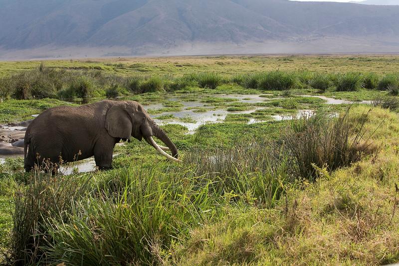 2007 07 18 Ngorongoro 636