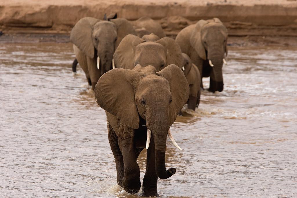 20100903_Samburu_0519