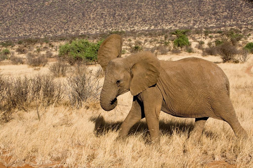 20100903_Samburu_334