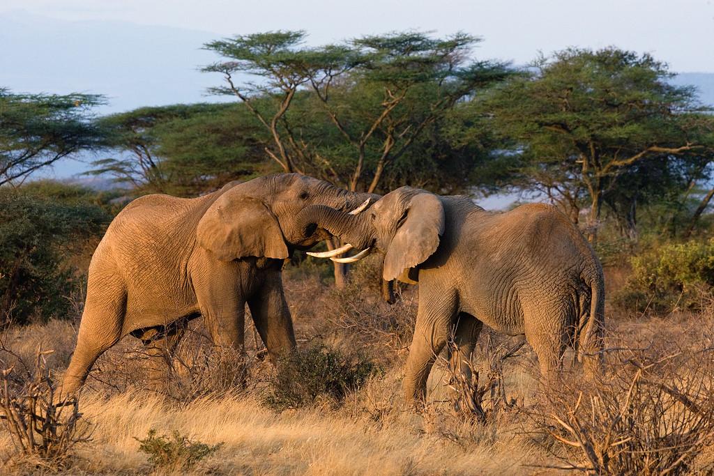 20100905_Samburu_014