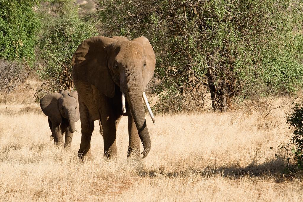 20100903_Samburu_311