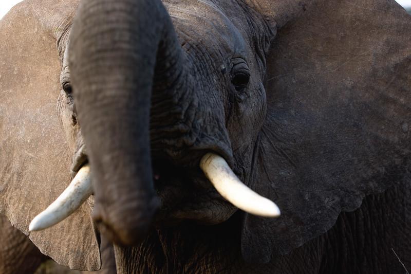 20100904_Samburu_179